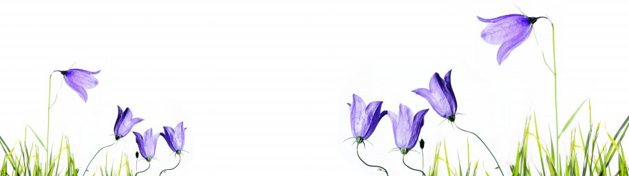 wildflowers-028
