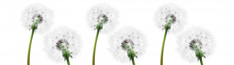 wildflowers-003