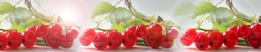 fruit-161