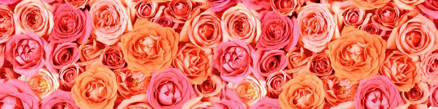 roses-023