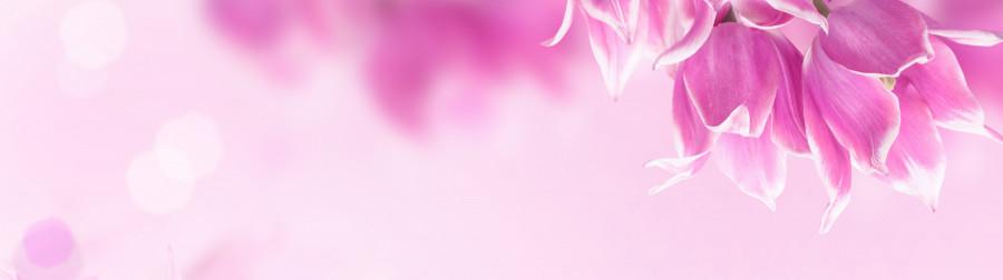 tulips-022