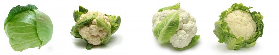 vegetables-122