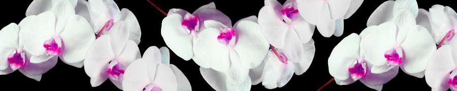 orchids-077