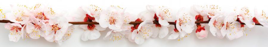 flowering-trees-056
