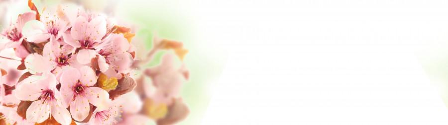 flowering-trees-061
