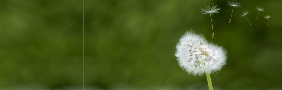wildflowers-083