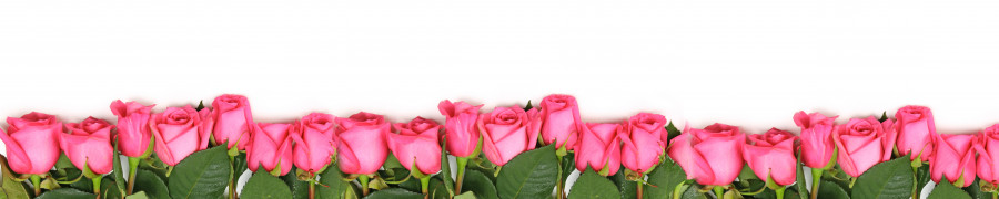 roses-046