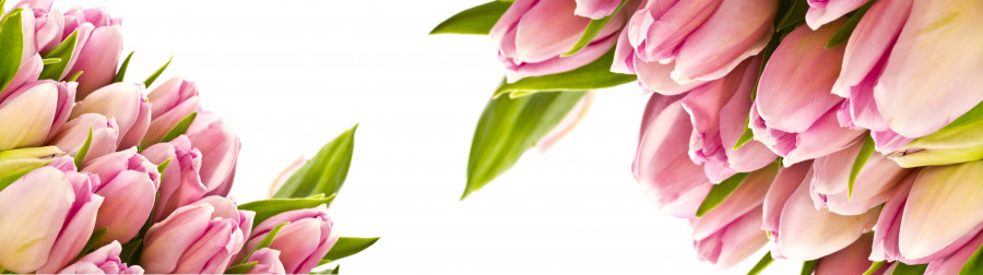 tulips-036