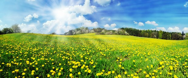 wildflowers-046