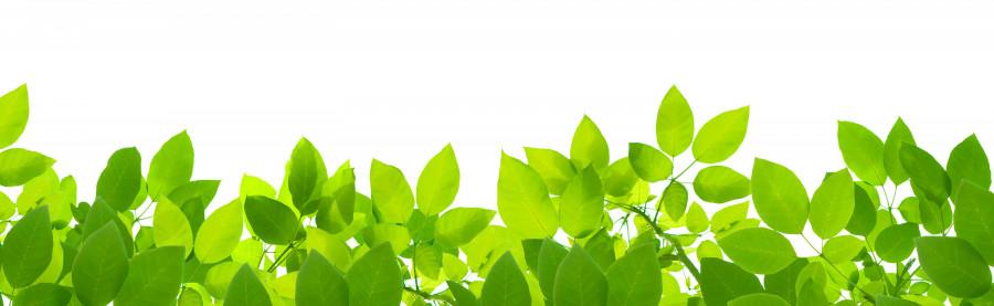bamboo-plants-087