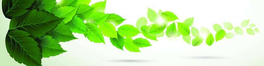 bamboo-plants-093