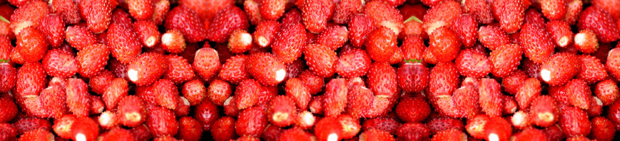 fruit-029