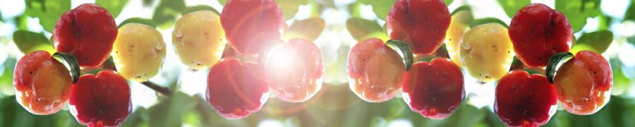 fruit-162