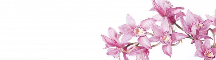 orchids-062