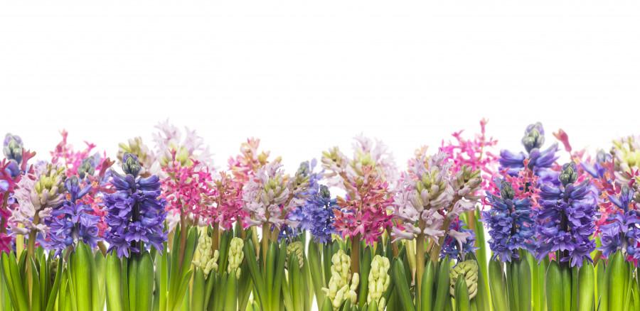 wildflowers-040