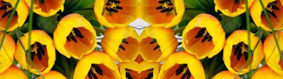 tulips-079