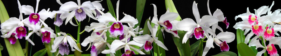 orchids-084