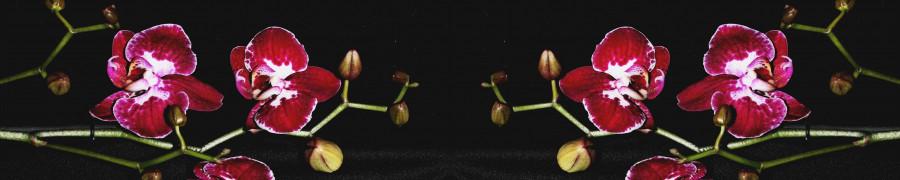 orchids-068