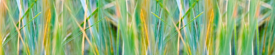 bamboo-plants-017