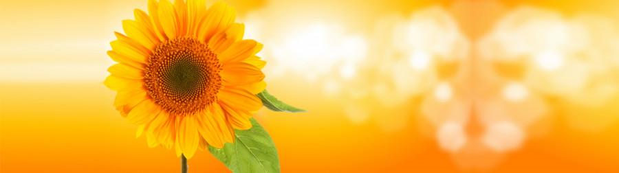 wildflowers-080