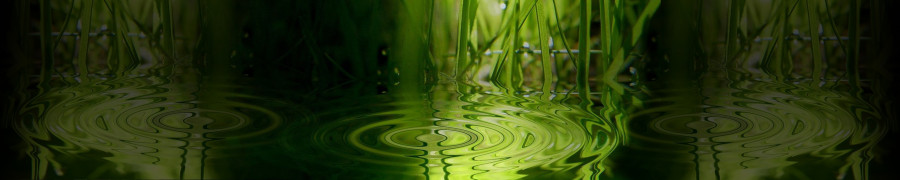 bamboo-plants-007