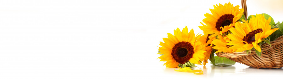wildflowers-079