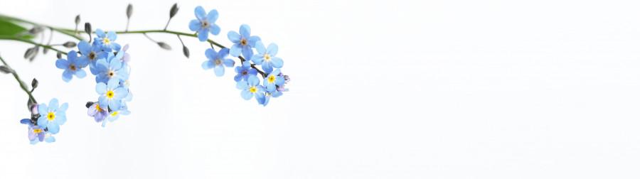 flowering-trees-064