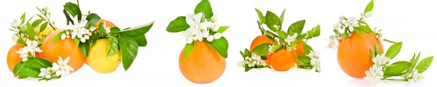 fruit-170