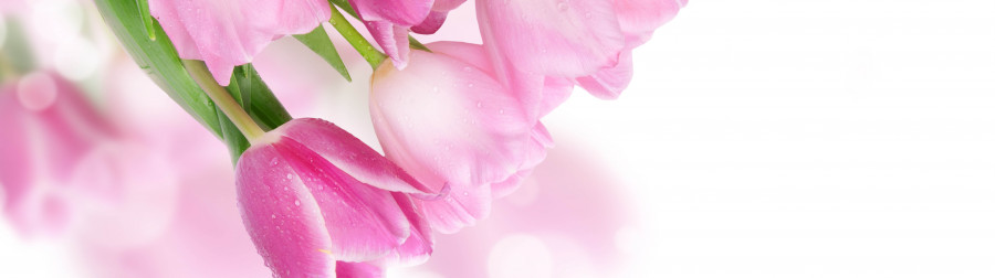 tulips-071