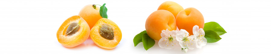 fruit-056