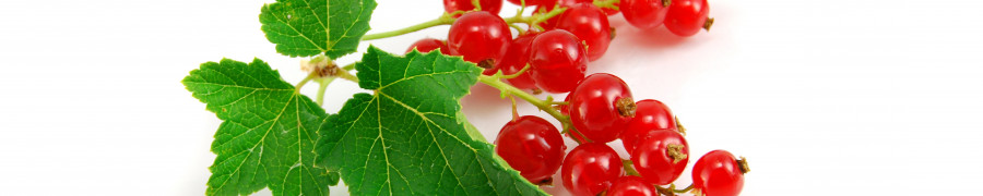 fruit-198