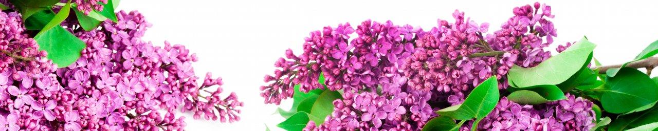 flowering-trees-029