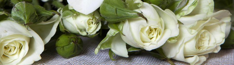roses-033
