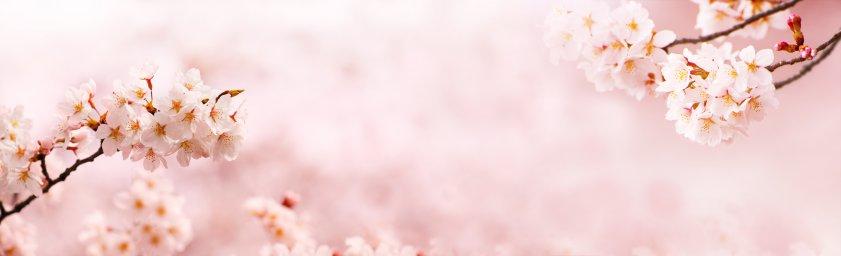 flowering-trees-006