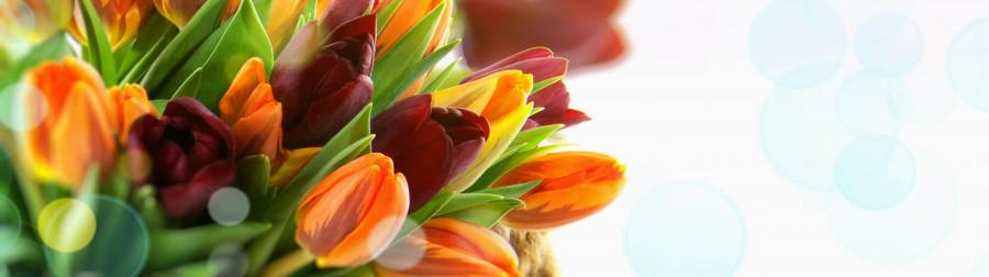 tulips-081