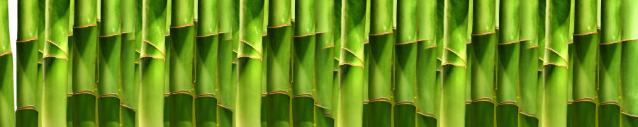 bamboo-plants-058
