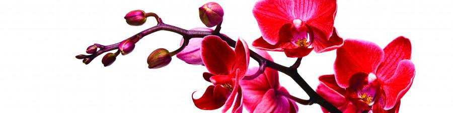 orchids-044