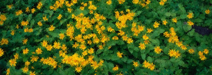 wildflowers-070