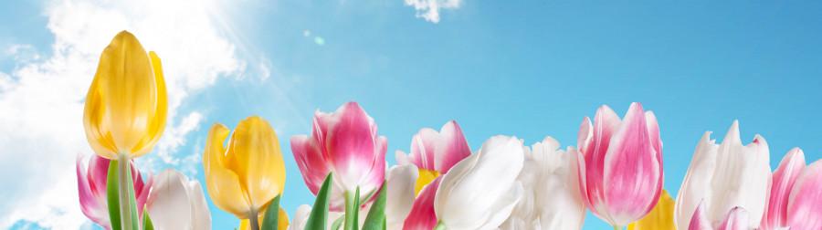 tulips-008