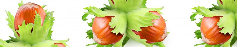 vegetables-104