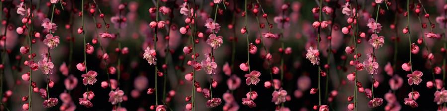 flowering-trees-020