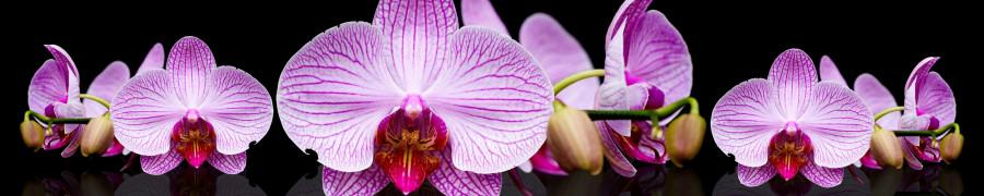 orchids-069