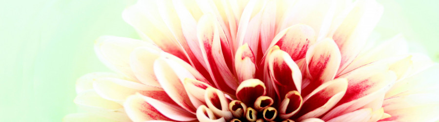 other-flower-059