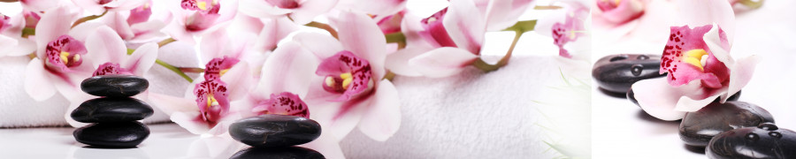 orchids-051
