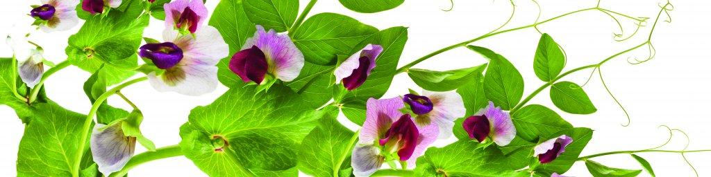 wildflowers-089