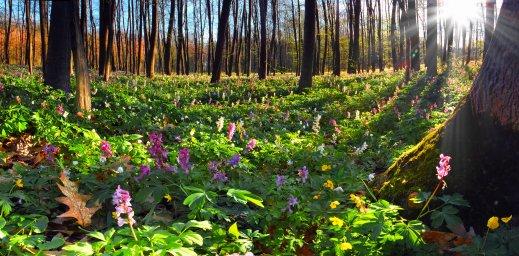 wildflowers-068