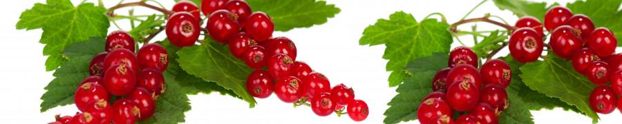 fruit-066
