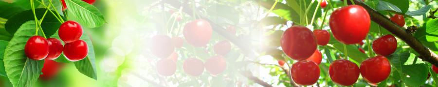 fruit-053