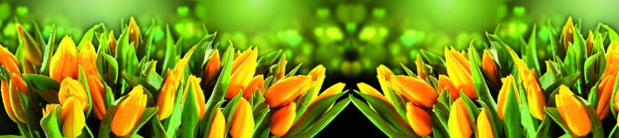 tulips-029