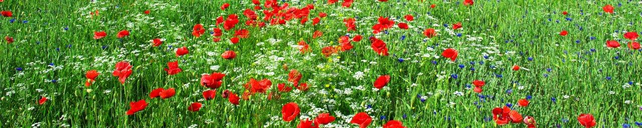 wildflowers-105